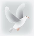 white dove isolated vector image vector image