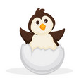 adorable baby penguin sits in cracked egg shell vector image vector image