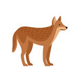 exotic wild dog vector image vector image