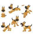 german shepherd puppy dog poses vector image