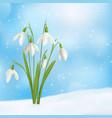 snow drop flower composition vector image