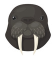 walrus icon arctic sea animal wildlife vector image