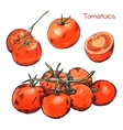 Watercolor colored pencils tomatoes sketches set vector image vector image