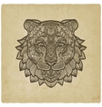 tiger head on grunge background vector image