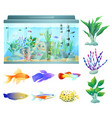 aquarium in glass container vector image vector image