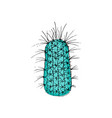 colored cactus hand drawn vector image vector image