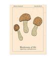 mushroom life agaricus blazei medicinal plant vector image vector image