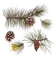 Pine branches colored print vector image vector image