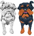 sketch red dog Brussels Griffon breed vector image