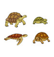 tortoise and turtle vector image