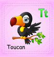 animals alphabet t is for toucan vector image