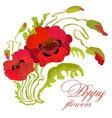 Bouquet of poppies stems leaves and buds isolated vector image