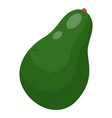 isolated green whole avocado at white background vector image