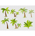 palm trees isolated on transparent background vector image
