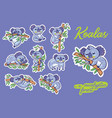 sticker set with fun koalas in the eucalyptus vector image