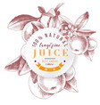 tangerine juice round emblem vector image vector image
