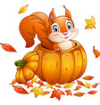 cute squirrel in a pumpkin vector image vector image