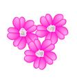 Pink Yarrow Flowers or Achillea Millefolium Flower vector image vector image