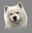 portrait a samoyed dog in artistic watercolor vector image vector image