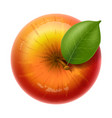 red apple delicious ripe and juicy fruit with vector image