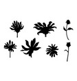 set of black flowers isolated on white vector image vector image
