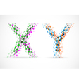 xy chromosomes vector image vector image
