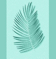 beautiful palm leaf on transparent background vector image vector image
