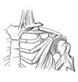broken clavicle vintage vector image vector image