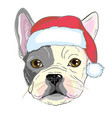 christmas greeting card pug dog with red santa s vector image