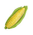 corncob sketch for your design vector image vector image
