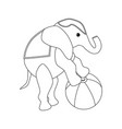 elephant on the ball circus vector image vector image