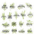 herbs spices seasonings and condiments lettering vector image vector image