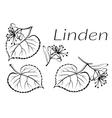 Linden Leaves Pictogram Set vector image