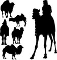set animals camels rider isolated on white vector image