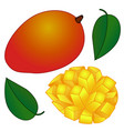 yellow-red tropical mango fruit with green leaf vector image