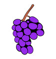 grape branch icon cartoon vector image