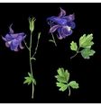 set of watercolor drawing delphinium vector image vector image