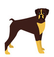 simple flat of dog standing vector image