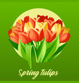 spring tulips vector image