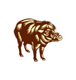 Philippine Warty Pig Woodcut vector image vector image