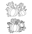 Black and white line drawings of pumpkins vector image vector image