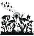 field of dandelion flowers black silhouettes of vector image vector image