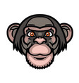 monkey head vector image vector image