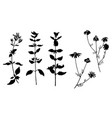 set of herbal plant isolated on white vector image