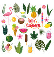 set of tropical leaves cute summer icons ice vector image