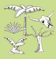 desert plants hand drawn cartoons vector image