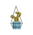 hanging cactus house plant in a pot elegant home vector image