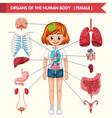 scientific medical organs human body vector image