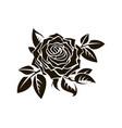 black rose image vector image vector image