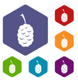 fruit of mulberry icons set hexagon vector image vector image